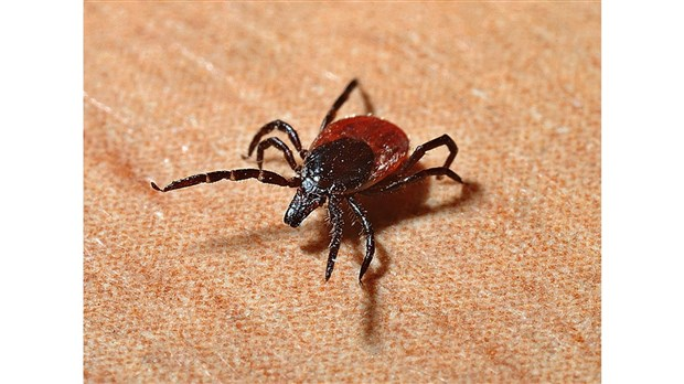 Maladie de Lyme: MRC de Drummond ajoutée pour le